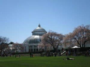 new york botanical gardens