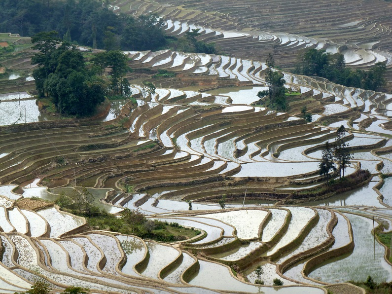 The Yuanyang Terraced Fields
